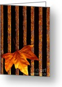 Striped Greeting Cards - Leaf in drain Greeting Card by Carlos Caetano
