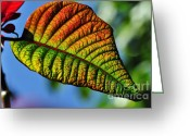Textured Floral Greeting Cards - Leaf of the Poinsettia Greeting Card by Kaye Menner