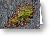 Fallen Leaf Greeting Cards - Leaf on the Sidewalk Greeting Card by Robert Ullmann