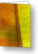 Lit Greeting Cards - Leaf Parttern Greeting Card by Carlos Caetano