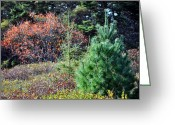 Tree Huggers Greeting Cards - Leaf Peeper Greeting Card by Daryl Macintyre