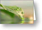 Ecosystem Greeting Cards - Leaf with water droplets Greeting Card by Sandra Cunningham