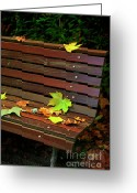 Wonderful Greeting Cards - Leafs in Bench Greeting Card by Carlos Caetano