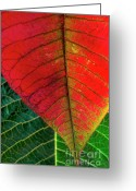 Lit Greeting Cards - Leafs Macro Greeting Card by Carlos Caetano