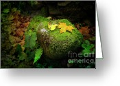 Moisture Greeting Cards - Leafs on Rock Greeting Card by Carlos Caetano