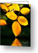 Macro Greeting Cards - Leafs over water Greeting Card by Carlos Caetano