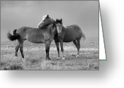 Wild Horses Greeting Cards - Lean on Me black and white Greeting Card by Rich Franco