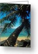 Beach Framed Prints Greeting Cards - Leaning Palm on Anini Beach Greeting Card by Kathy Yates