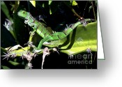 Iguana Greeting Cards - Leapin Lizards Greeting Card by Karen Wiles