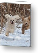 Dog Prints Photo Greeting Cards - Leash Free Greeting Card by Lisa  DiFruscio