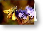 Pollinate Greeting Cards - Least Skipper on Blossom  Greeting Card by Thomas R Fletcher