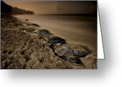 Riviere Greeting Cards - Leatherback Turtles Nesting On Grande Greeting Card by Brian J. Skerry