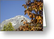 Snow Capped Greeting Cards - Leaves and snow-capped mountain Greeting Card by Mats Silvan
