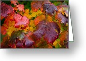 Folage Greeting Cards - Leaves at Peak Color Greeting Card by David Patterson