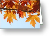 Red Leaves Greeting Cards - LEAVES AUTUMN Orange Sunlit Fall Leaves Blue Sky Baslee Troutman Greeting Card by Baslee Troutman Art Prints Collections