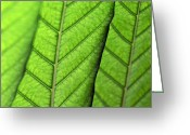 Palm Leaf Digital Art Greeting Cards - Leaves Greeting Card by Glennis Siverson