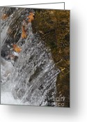 Cheekwood Gardens Greeting Cards - Leaves in the water Greeting Card by Denise Ellis
