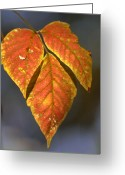Cove Framed Prints Posters Greeting Cards - Leaves on a Branch Greeting Card by Paul Pobiak