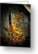 Old Barns Photo Greeting Cards - Leaves on an Old Barn Greeting Card by Joyce L Kimble