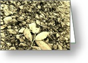 Background Greeting Cards - #leaves #stones #background #vintage Greeting Card by Cristina Sferra