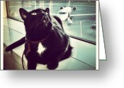 Petstagram Greeting Cards - Leavin On A Jet Plane Greeting Card by Natasha Marco