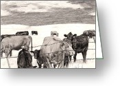 "\\\""barbed Wire Fence\\\\\\\"" Drawings Greeting Cards - Leery Cows Greeting Card by Jason Thrun"
