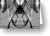 Dressage Digital Art Greeting Cards - Left or Right Greeting Card by East Coast Barrier Islands Betsy A Cutler