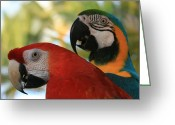 Animalia Greeting Cards - Lele Greeting Card by Sharon Mau