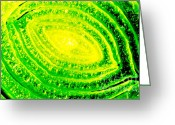 Shape Photo Greeting Cards - LEMON AND LIME study of vegetable close up Greeting Card by Andy Smy