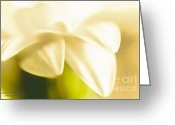 Flower Cards Greeting Cards - Lemon Sunshine Greeting Card by Jayne Logan