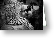 Black And White Animal Greeting Cards - Leopard Greeting Card by Cesar March
