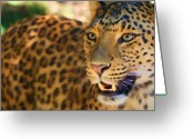 Expression Pastels Greeting Cards - Leopard Greeting Card by Louise Fahy