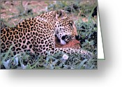 Killer Cats Greeting Cards - Leopard Lunch Greeting Card by Carl Purcell
