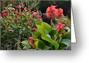 Canna Greeting Cards - Les Fleurs de Honfleur Greeting Card by Joe Bonita