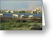 Rides Greeting Cards - Les Saintes Marie de la Mer. Camargue. Provence. Greeting Card by Bernard Jaubert