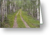 Tree-lined Greeting Cards - Less Traveled Road Through Aspens Greeting Card by Dawn Kish