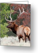 Rut Greeting Cards - Let the Rut Begin Greeting Card by Sandra Bronstein