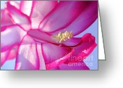 Flower Stamen Greeting Cards - Let the Sun Shine In Greeting Card by Kaye Menner