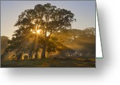 Heavenly Greeting Cards - Let there be Light Greeting Card by Mike  Dawson