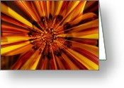 Cheering Greeting Cards - Let Your Light Shine Greeting Card by Carol Groenen