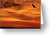 Florida Sunset Greeting Cards - Lets Dance Greeting Card by Adele Moscaritolo