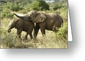 African Animals Greeting Cards - Lets Play Greeting Card by Michele Burgess