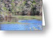 Lettuce Green Greeting Cards - Lettuce Lake with Bridge Greeting Card by Carol Groenen
