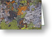 Orange Grey Greeting Cards - Lichen Pattern Series - 15 Greeting Card by Heiko Koehrer-Wagner
