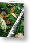 Leaves Photographs Greeting Cards - Lichen Recycling Greeting Card by Trish Hale