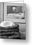Kitty Greeting Cards - Life Imitates Art Greeting Card by Julie Niemela