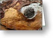Rotted Greeting Cards - Life in a Photograph Greeting Card by Jeffrey Campbell