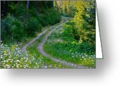 Aster  Photo Greeting Cards - Life Is A Journey On A Road Lined With Daisies Greeting Card by Karon Melillo DeVega