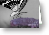 Butterflies And Blue Flowers Greeting Cards - Life Without Joy Greeting Card by Kim Henderson