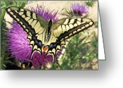 Mediterranean Butterfly Greeting Cards - Lifes Harmony  Greeting Card by Eric Kempson